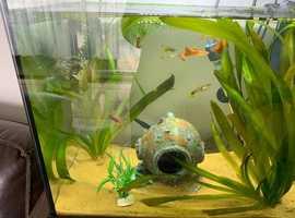 Aquarium and tropical fish professionaly setup