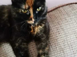1 year old tortie female