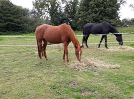 2 exracers for part loan