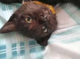 12 week kitten