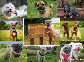 Loyal Paws Pet service