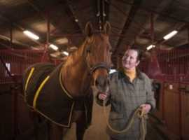 Registered charity has horses for loan in NE Scotland