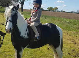 12hh Pretty Lead rein Pony (gelding)
