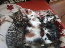 5 beautiful kittens