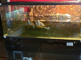 Family of three Terrapins for sale