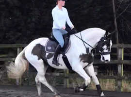 Backing breaking schooling problem quirky horses all welcome
