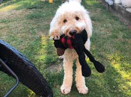 Professional Dog Walking & Pet Visit/Feeding