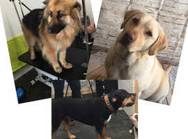 Cage free Dog Grooming Salon City and Guilds Qualified staff, Fully Insured