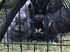 3 girl rabbits + hutch