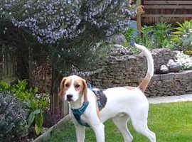 A lovable hound