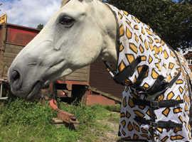 Irish sport horse mare
