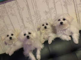 2 beautiful boys and 2 girls looking for a new family