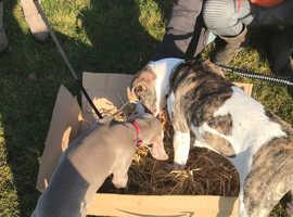Fun Puppy Training Course