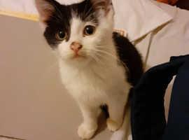 Black and white kitten.
