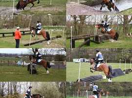 Lovely 13.2hh Welsh C