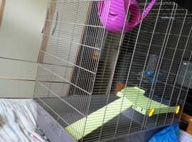 Female rat & Cage