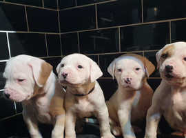 The Best Of The Best Darkwatchdogs 2019 Litter