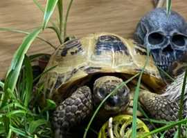 Wanted tortoises and turtles please cheap price or free to a loving home