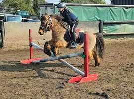 top home wanted for special pony