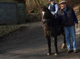 12.2hh Dartmoor Pony