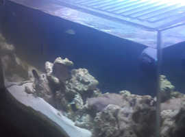 Aqua 1 Marine Aquarium