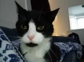 Missing cat who is ill and needs his medication