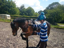 Smart New Forest pony for sale