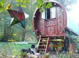Gypsy Caravan Experience Forest of Dean