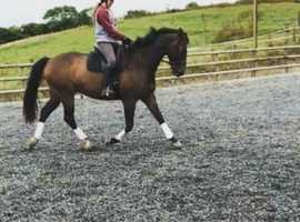 Rider available/ share wanted