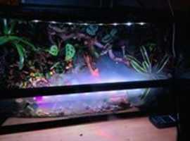 Vivarium full set up , Bio-active  Paludarium