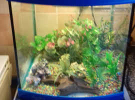 Fish tank  and all items you need no fish