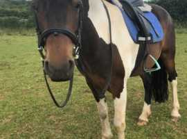 Gorgeous little mare