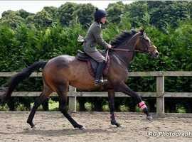 Free brood mare