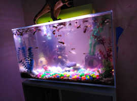 Fantail fish baby's for sale