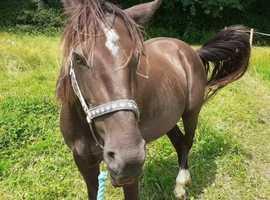 Dolly 13.2 Project Pony