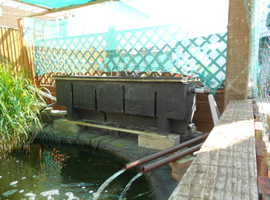 closing down koi pond every thing to go