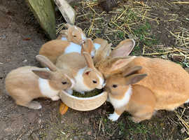 7 gorgeous baby rabbits looking for new homes
