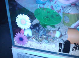 4 mice and cage to rehome