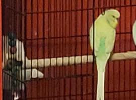 missing bird