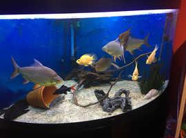 350 Ltr corner fish tank complete