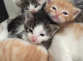 Super cute litter of kittens