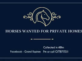Horses Wanted