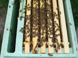 Nuc of bees