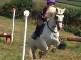 Pony club pony
