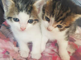 2 boys with blue eyes