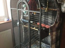 Parrot cafe for sale
