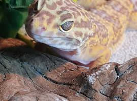 Leicestershire Reptile Rescue UK expanded to Hastings