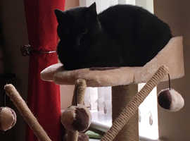 Cat needs good home