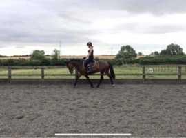 Part loan pony