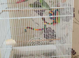 Pair of Parrotlets with cage and toys